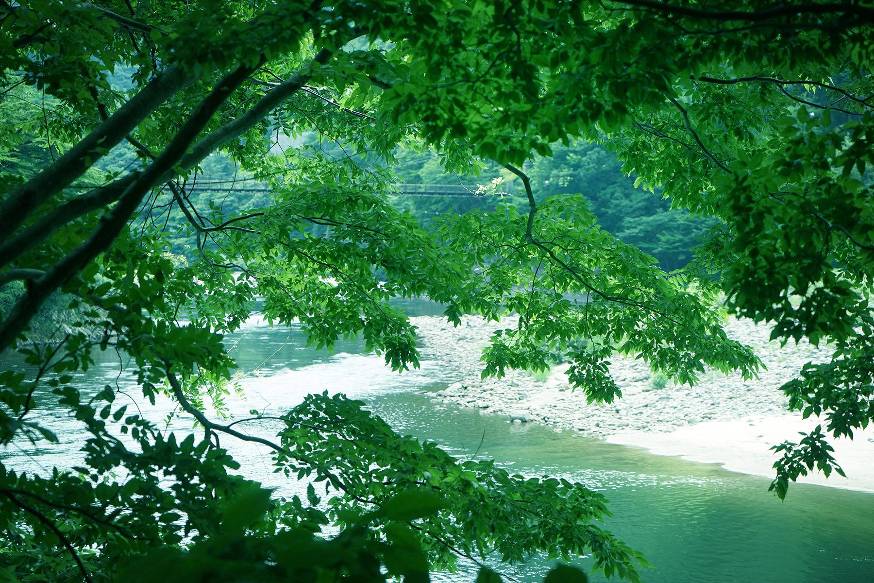 荒川からの全景7月