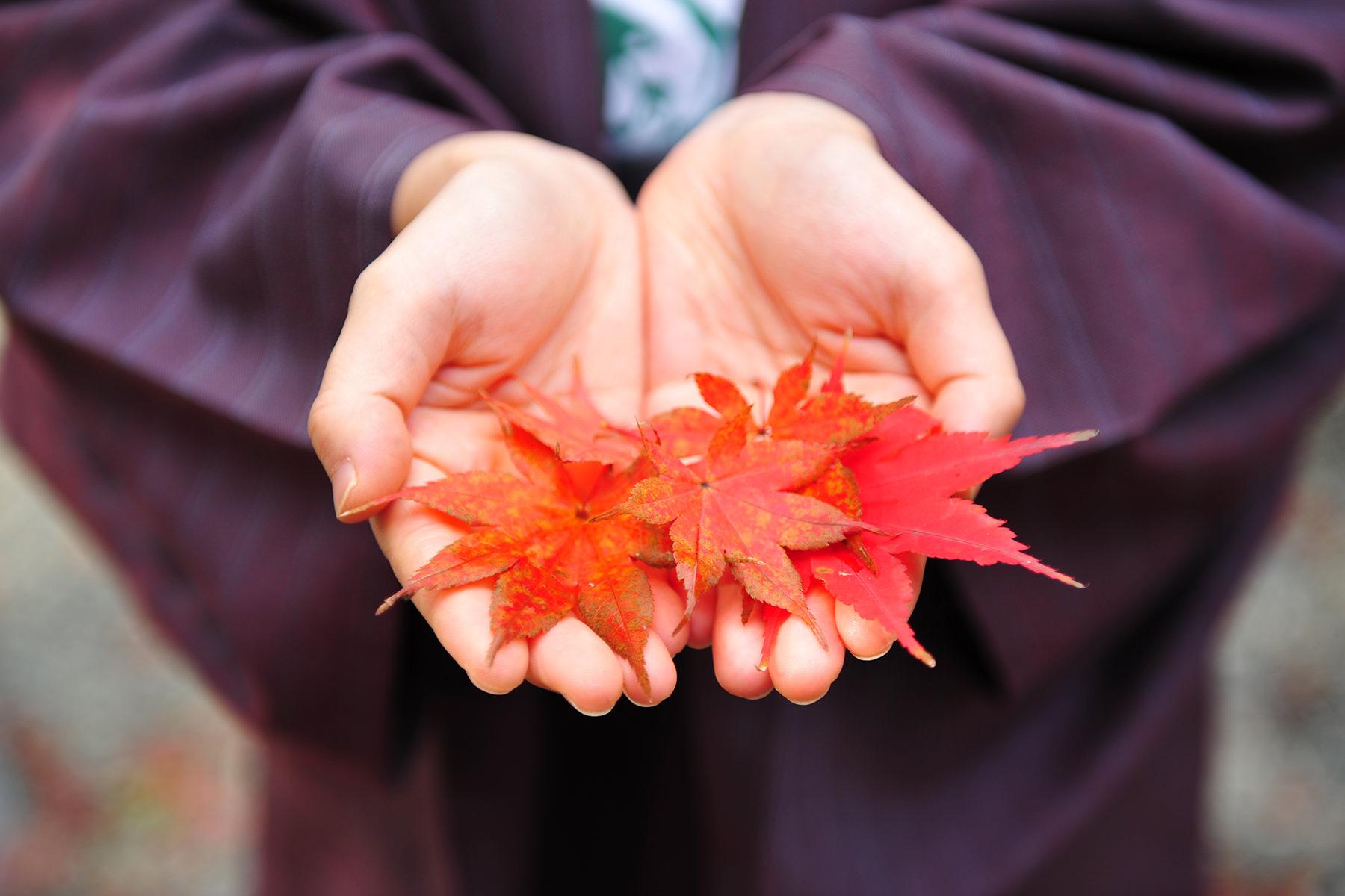 秋-4 手の平に紅葉